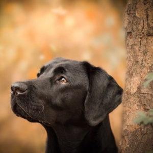 Erkrankungen Archive - Seite 2 von 2 - Herzenshund kerngesund