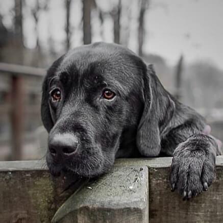 wieviel-kalzium-braucht-der-hund
