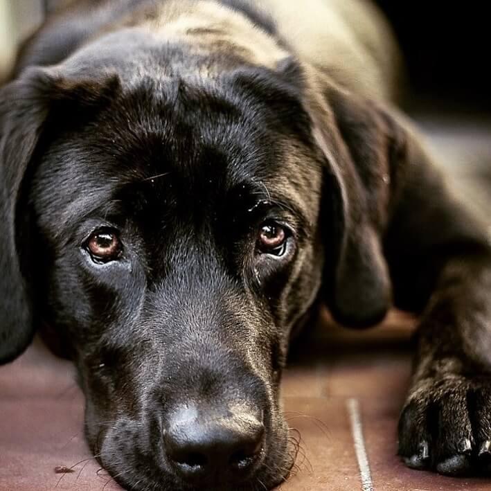 dein-hund-hat-leishmaniose-keine-panik