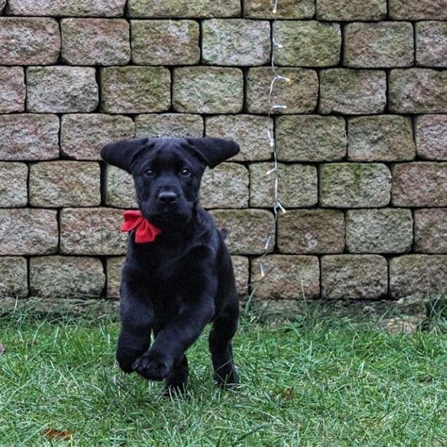 vom-welpen-zum-erwachsenen-alltagssicheren-hund-3